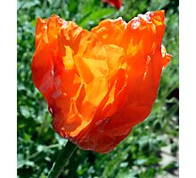Village Crumpled Poppy Photographic Print