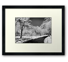 Snow Trees Framed Print