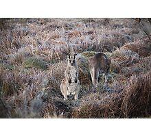 Kangaroo Photographic Print