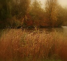 Soft Autumn Hues At Gloucester Park, Basildon, Essex by edesigns14