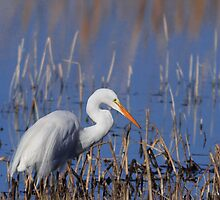 White Egret Fishing by Kathleen Bishop