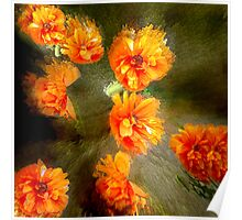 Orange poppy abstract Poster