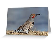Red-shafted Northern Flicker Greeting Card