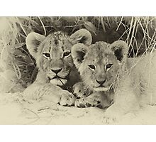 Priceless cubs! Photographic Print