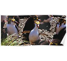 Royal Penguin Running The Gauntlet Poster