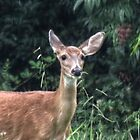 A Deer by ChuckBuckner