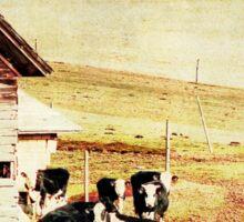Cattle in the field Sticker