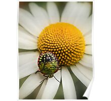 Colorful stink bug Poster