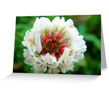 Red and whtie clover blossom Greeting Card