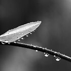 Droplets by LadyFi