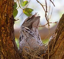 Learning To Imitate A Branch by byronbackyard