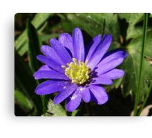 Cute blue and yellow flower Canvas Print