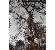 Continual Autumn Photographic Print