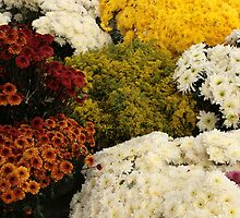 Assorted Cut Flowers by rhamm
