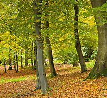 Woodland Carpet by vivsworld