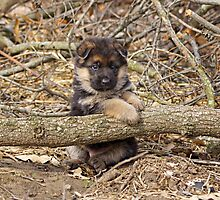 Puppy and Log by Sandy Keeton