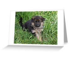 Puppy in Grass Greeting Card