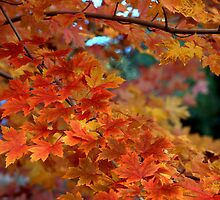 Autumn Sunburst by K D Graves Photography