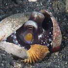 Coconut Octopus in Shell by Mark Rosenstein
