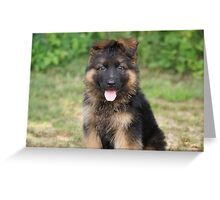 Long Coated Puppy Greeting Card