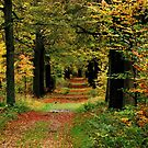 Strolling through the autumnal forest again by jchanders