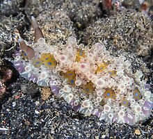 Nubbly Nudibranch by Mark Rosenstein