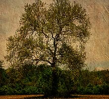 Alone With a Tree by PineSinger