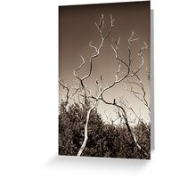 wilsons promontory, trees 1 Greeting Card