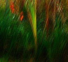 Artscape The Reeds, Oktober 2013 by Imi Koetz