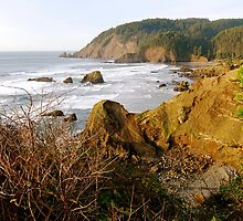 Late Afternoon at Ecola State Park by Timothy State
