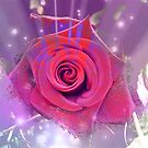Rosa by Dale Lockridge