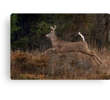 Early Morning Buck 2 - White-tailed Deer Canvas Print