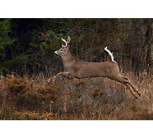 Early Morning Buck 2 - White-tailed Deer Photographic Print