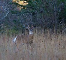 Little Buck by Jim Cumming
