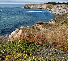 Mendocino Coast in Spring by Kathleen Bishop