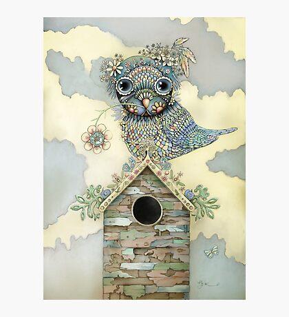 Blue Owl Birdhouse II Photographic Print