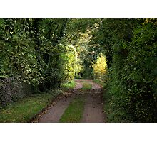 Woody Lane  Photographic Print