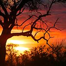 This is Africa!! by jozi1