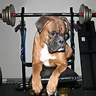 Boxer on Bench with Weights by SpiceTree