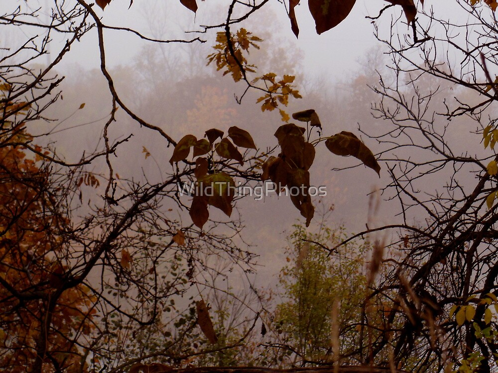 Autumn Peek by WildThingPhotos