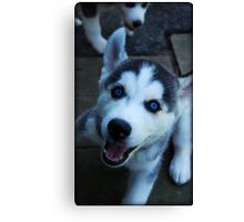 Too Cute! Canvas Print