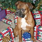 Boxer Christmas by SpiceTree