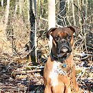 Boxer in Autumn Forest by SpiceTree