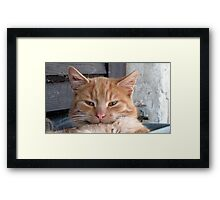 Yellow Cat Framed Print