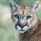 Cougar by jude walton