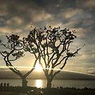 Corel Trees by Kimberly Palmer