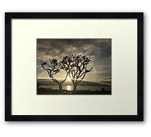 Corel Trees Framed Print