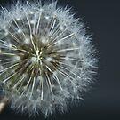 Make a wish by KirstyStewart