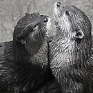 Sea Otters by jude walton