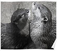 Sea Otters Poster